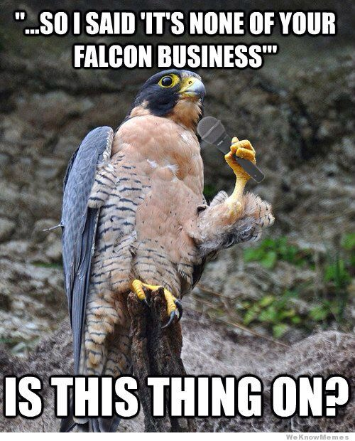 none of your falcon business