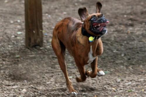 gremlin puppy